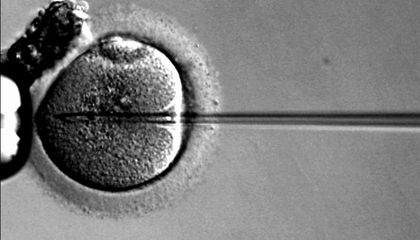 In Vitro Fertilization Was Once As Controversial As Gene Editing is Today