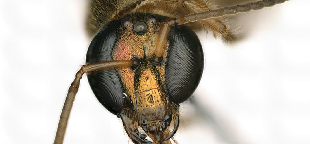 Caption: This Bee Has a Body That's Half Male, Half Female
