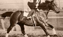 Betting on Seabiscuit