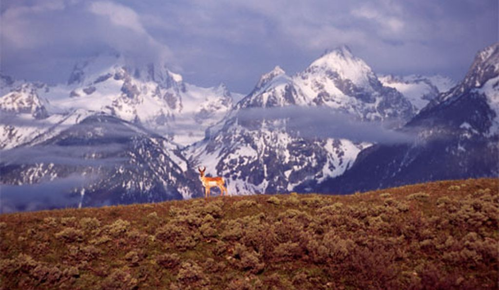 The fight to save the Grand Teton National Park pronghorn herd isn't the first local battle pitting development rights against environmental concerns. Creation of the 310,000-acre park itself was, says historian Robert Righter,