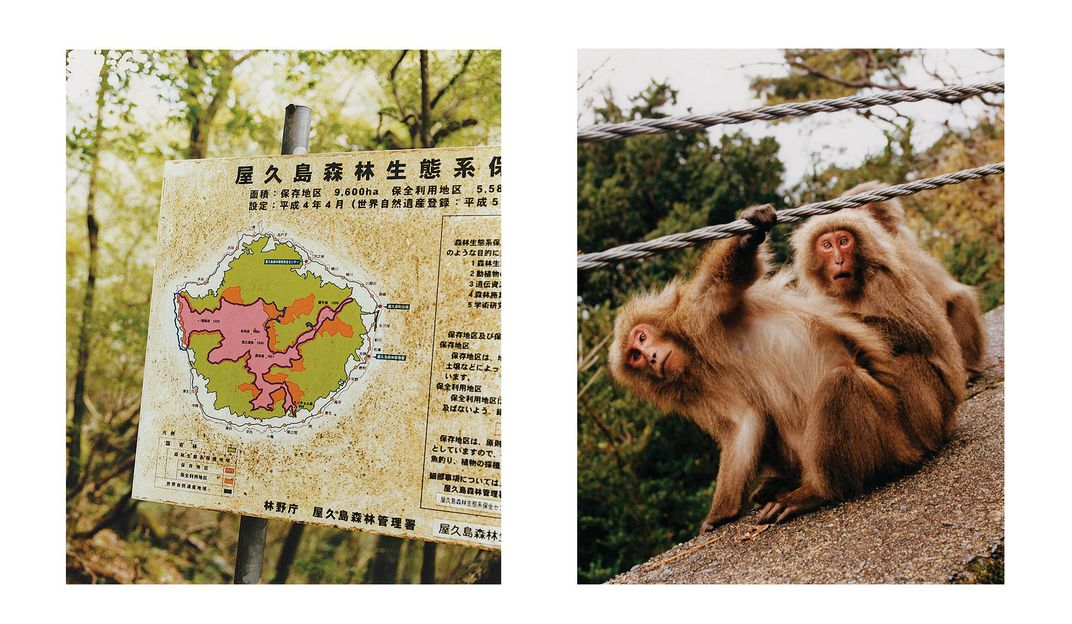 Trail map of Yakushima and three adult macaques