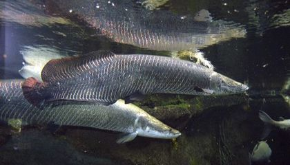 Two Fish Die at the National Zoo