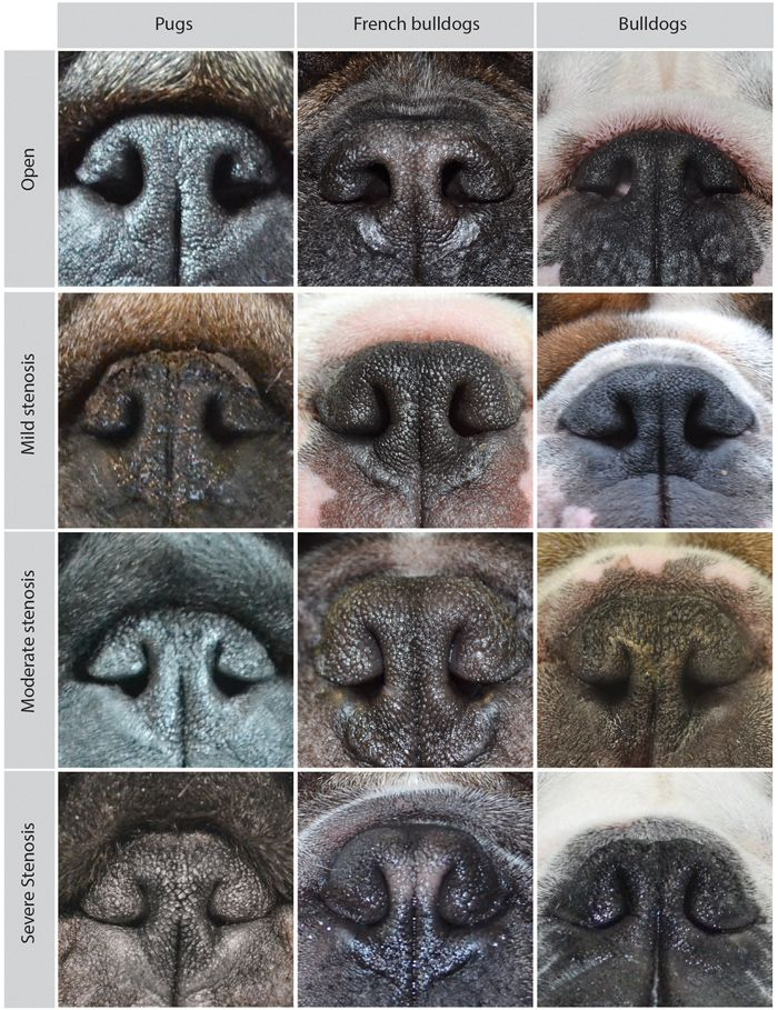 The Evolution of Petface | Science | Smithsonian