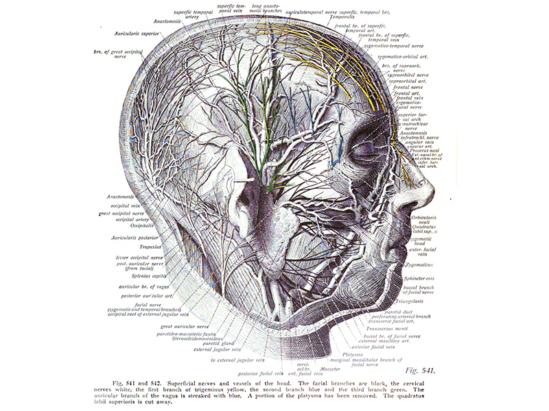 An anatomical diagram from a textbook published in 1908. It shows a drawing of a man's side profile and a detailed diagram of all the organs, veins and nerves with lines and names branching out from the head.
