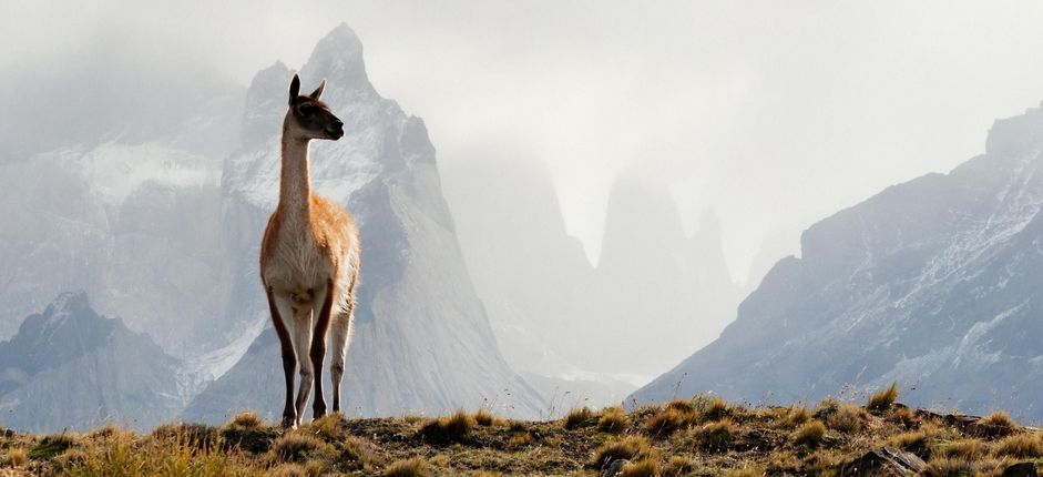 Chile's Patagonian Frontier <p>Experience South America&rsquo;s last great frontier on our new unique itinerary featuring Patagonia&rsquo;s majestic landscapes and national parks.&nbsp;</p>