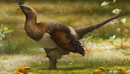 Image: This dinosaur was much fuzzier than scientists once thought