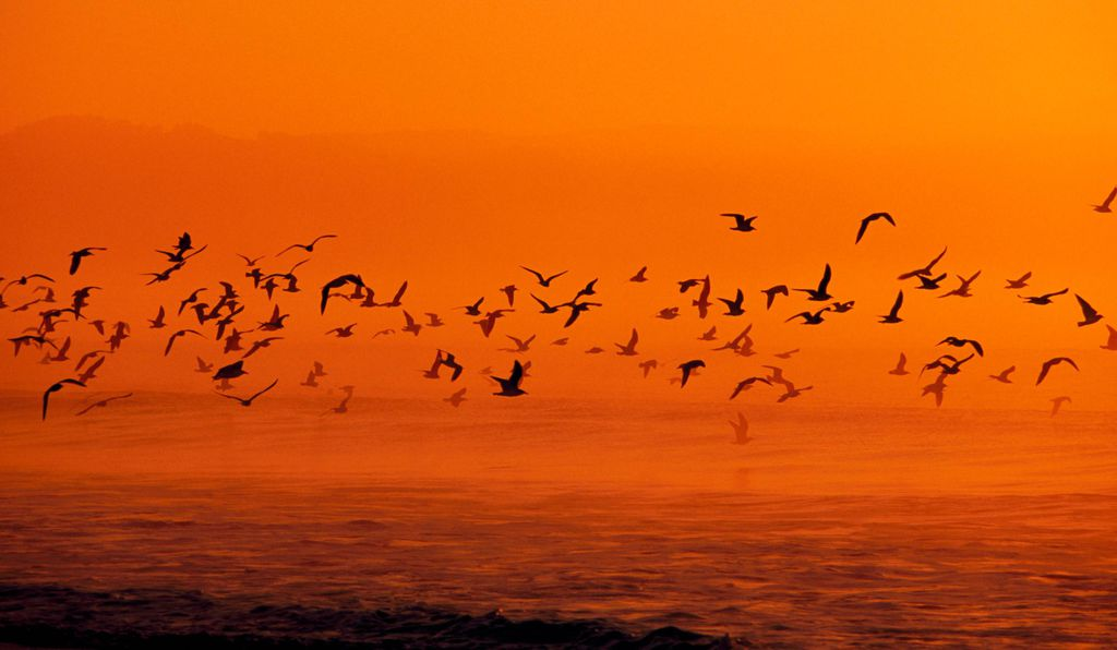 Point Reyes National Seashore is one of the best birding spots in the country, boasting nearly 500 species.