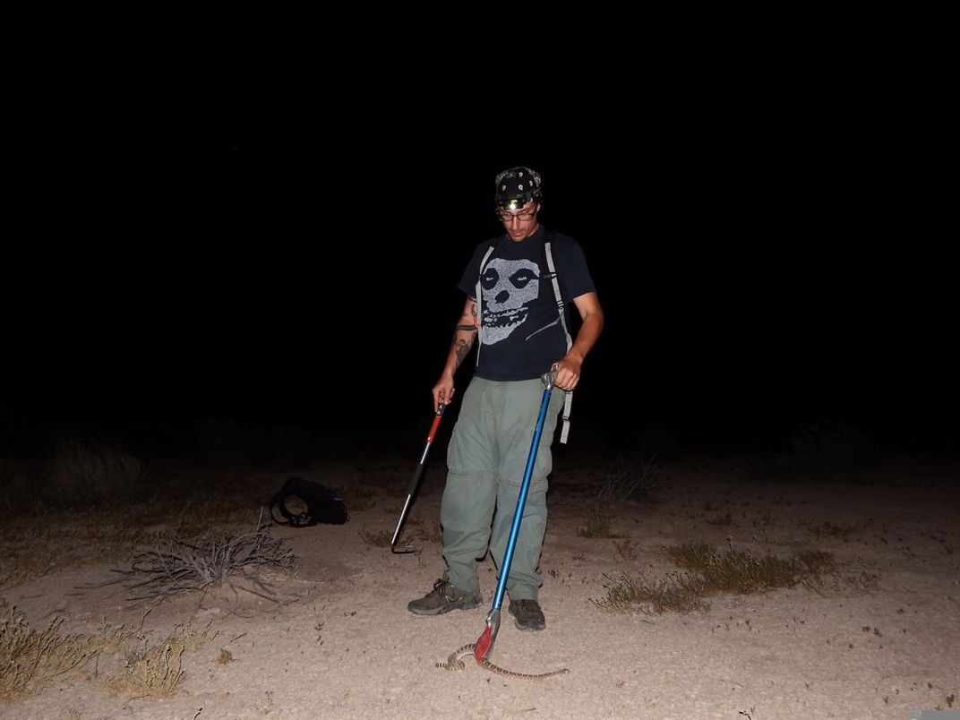 A person collects a snake at night.