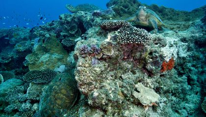 Coral Reefs Face the Dual Threats of Ocean Acidification and Erosion