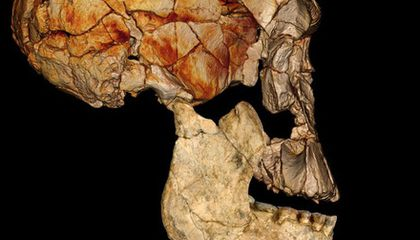 Tree Climbers, Wood Eaters, and More: The Top 10 Human Evolution Discoveries of 2012