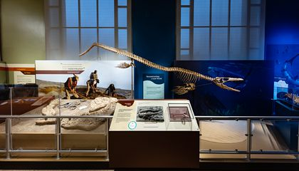 "A new exhibition at the Smithsonian's National Museum of Natural History reveals how millions of years ago, large-scale natural forces created the condition for real-life sea monsters to thrive in the South Atlantic Ocean basin shortly after it formed. ""Sea Monsters Unearthed"" offers visitors the opportunity to dive into Cretaceous Angola's cool coastal waters, examine the fossils of striking marine reptiles that once lived there, and learn about the forces that continue to mold life in the ocean and on land. (Smithsonian Institution)"