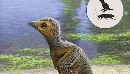 127-Million-Year-Old Baby Bird Fossil Offers Peek Into Ancient Avian Development