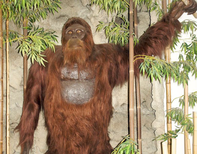 bigfoot Gigantopithecus