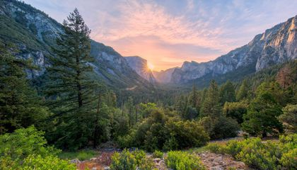 The Year in National Parks