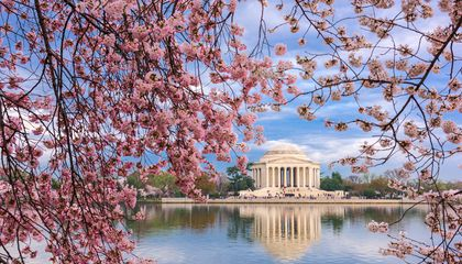 Cherry Blossom Forecast Update: When Will Washington, D.C. Reach Peak Bloom?