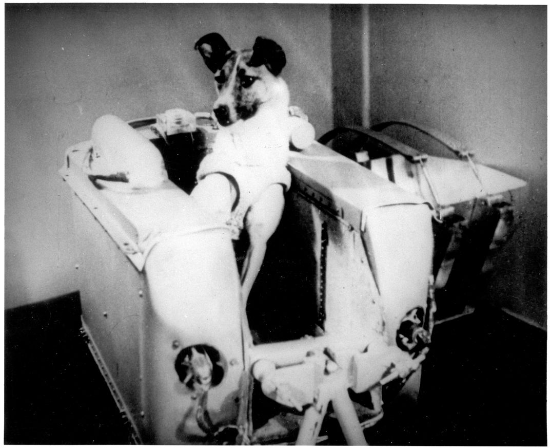 Laika in a machine