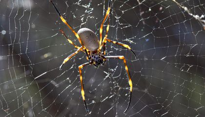 Some Spiders Eat Salads