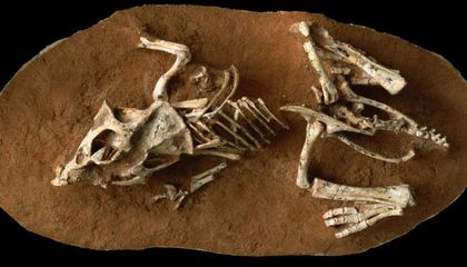 Ancient Teeth Show That Dinosaurs Took a Long Time to Hatch