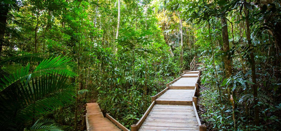 Boardwalks in the Daintree Rainforest