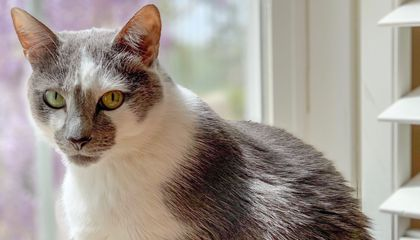 Cats May Recognize Their Own Names—but It Doesn't Mean They Care