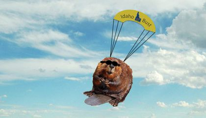 Beavers On Parachutes