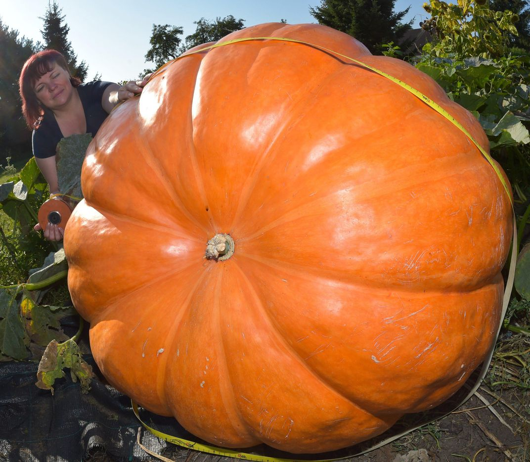 The Secret to Growing the World's Largest Pumpkin ...