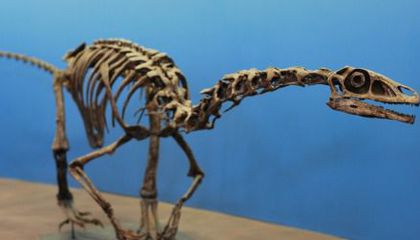 The Mysterious Martharaptor