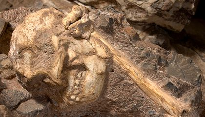 Little Foot, the Most Complete Australopithecus Fossil, Goes on Display
