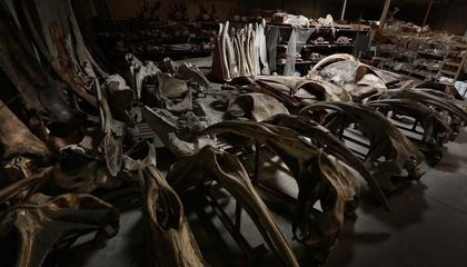 In L.A. There's a Warehouse Filled with Whale Bones