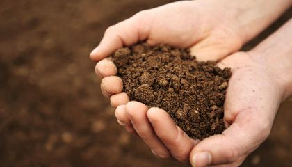Soil Has a Microbiome, Too