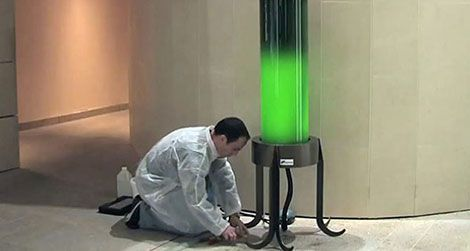 Can an Algae-Powered Lamp Quench Our Thirst For Energy?