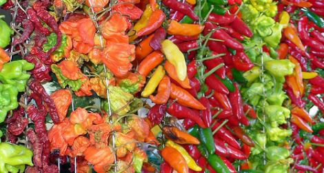 If spicy fruits are helpful to a chili plant, why aren't all chili peppers hot?
