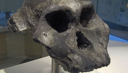 What Was the Black Skull?