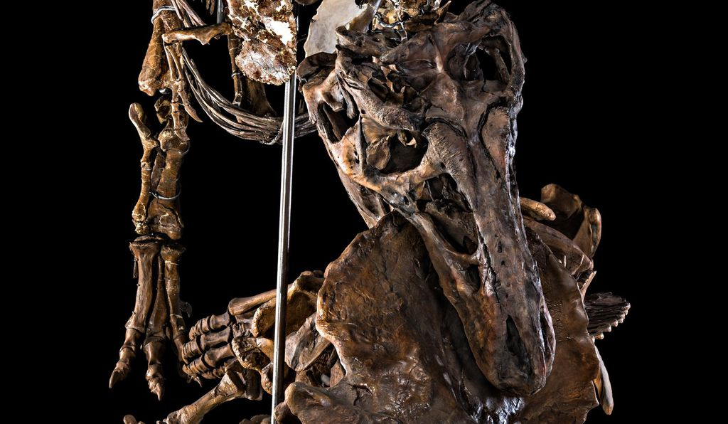 The Natural History's famed dinosaur hall reopened in 2019 after the most extensive renovation in the museum's history.
