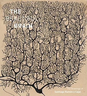Preview thumbnail for video 'The Beautiful Brain: The Drawings of Santiago Ramon y Cajal