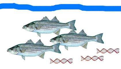 Scientists Can Tell What Fish Live Where Based On DNA in the Water