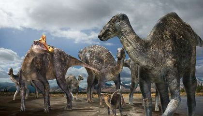 New Type of Arctic Dinosaur Discovered in Alaska