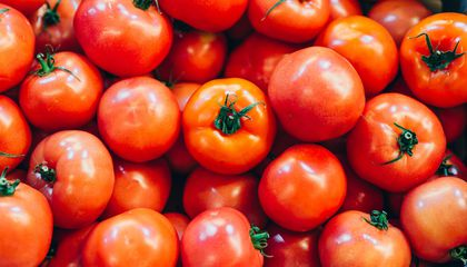 How Scientists Are Recapturing the Magic of a Beloved, Long-Lost Tomato