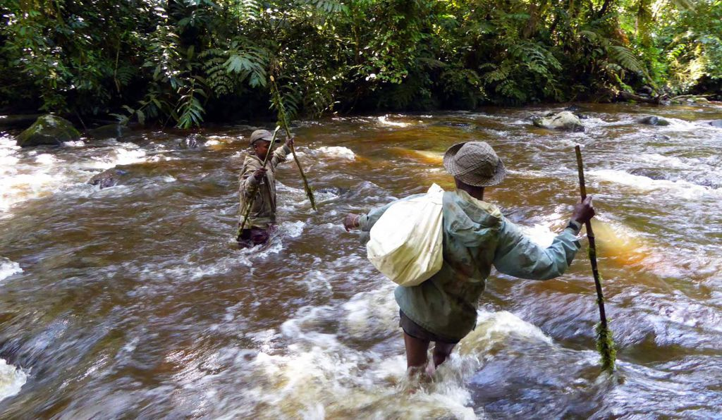 Rangers from Itwombe Natural Reserve crossing a river to get to the shallows on the other side to collect stilt mice.