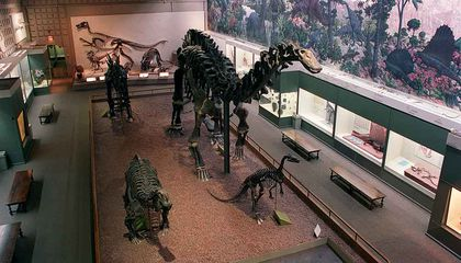 The Scientific Daredevils Who Made Yale's Peabody Museum a National Treasure