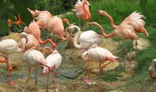 Forget Llamas and Lions, Flamingos Are the Best Escape Artists