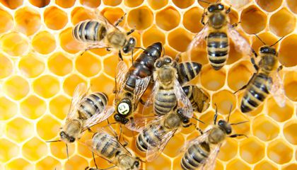 How Urban Beehives Can Help Researchers Detect Air Pollution