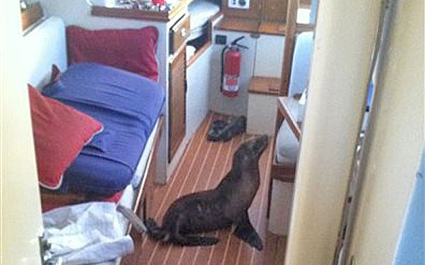 Sailor gets snoring sea lion shipmate