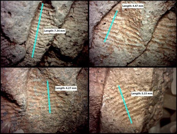 Ancient Fingerprints Show Men and Women Both Made Pottery in the