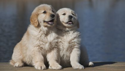 Fertility Problems for Man's Best Friend Could Spell Trouble for Man