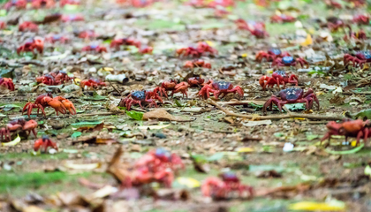 Millions of Migrating Red Crabs Are Coming to Google Street View