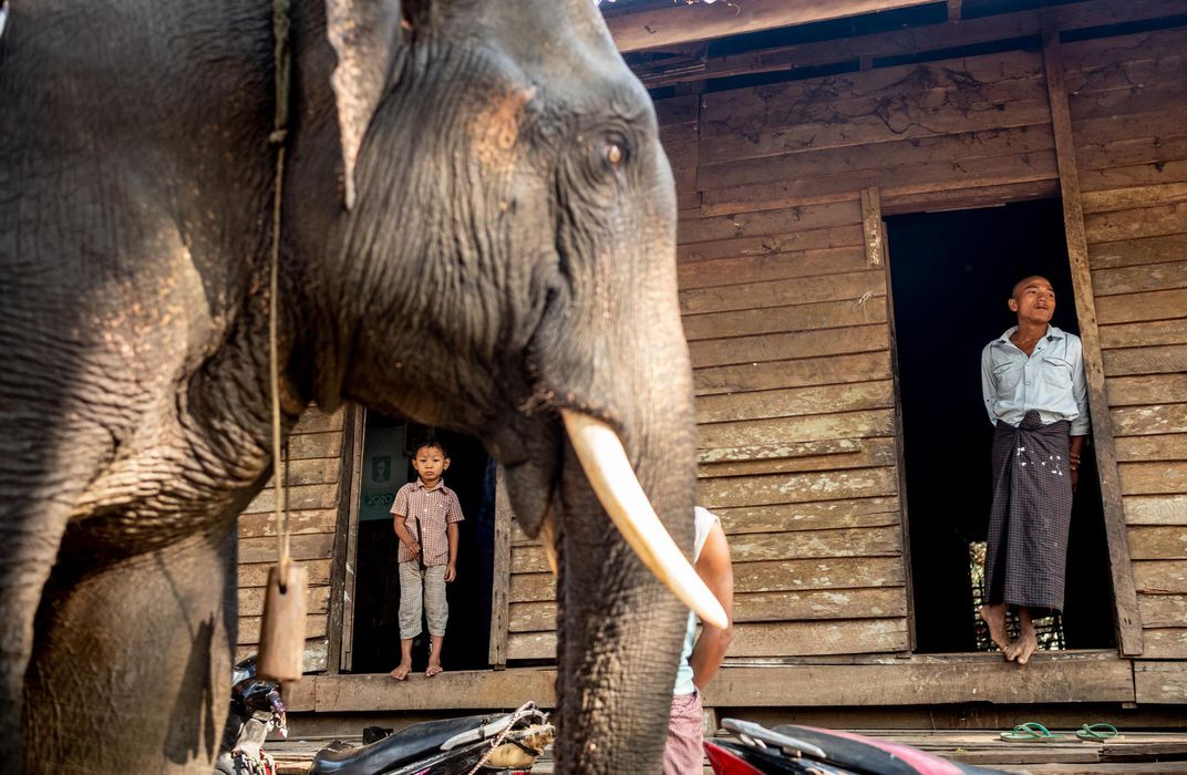A mahout returns home to his family