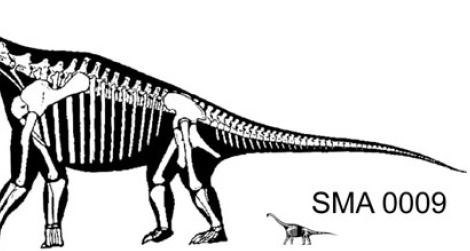 A reconstruction of a hypothetical adult Brachiosaurus next to a possible juvenile Brachiosaurus, SMA 0009.