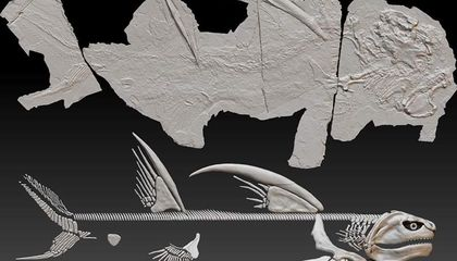 New Mexico's 'Godzilla' Shark Fossil Gets an Official Name
