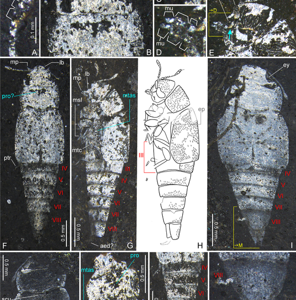 Fossil Mix-Up Could Rewrite the History of Beetles | Science